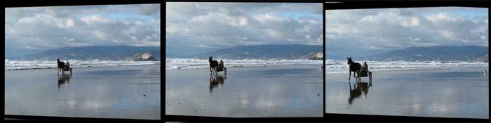 horse_at_beach