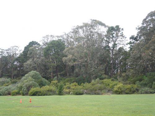 Meadow Cones