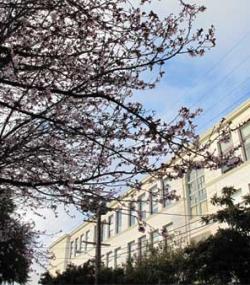 2010 Cherry Blossoms