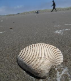 2011 Beach Finds 2
