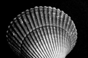 A Fucking Shell