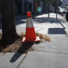 Afternoon Cone