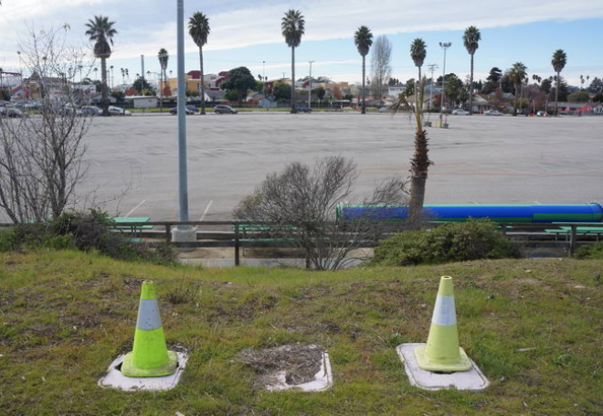 Bleached Cones