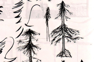 Redwoods Mod Mod