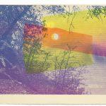 Oak Screen Print